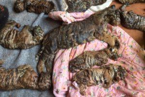 dead-tiger-cubs