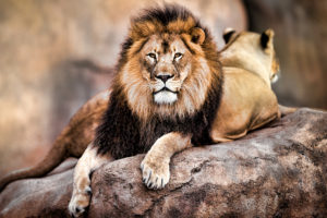 dish-072915-cecil-the-lion